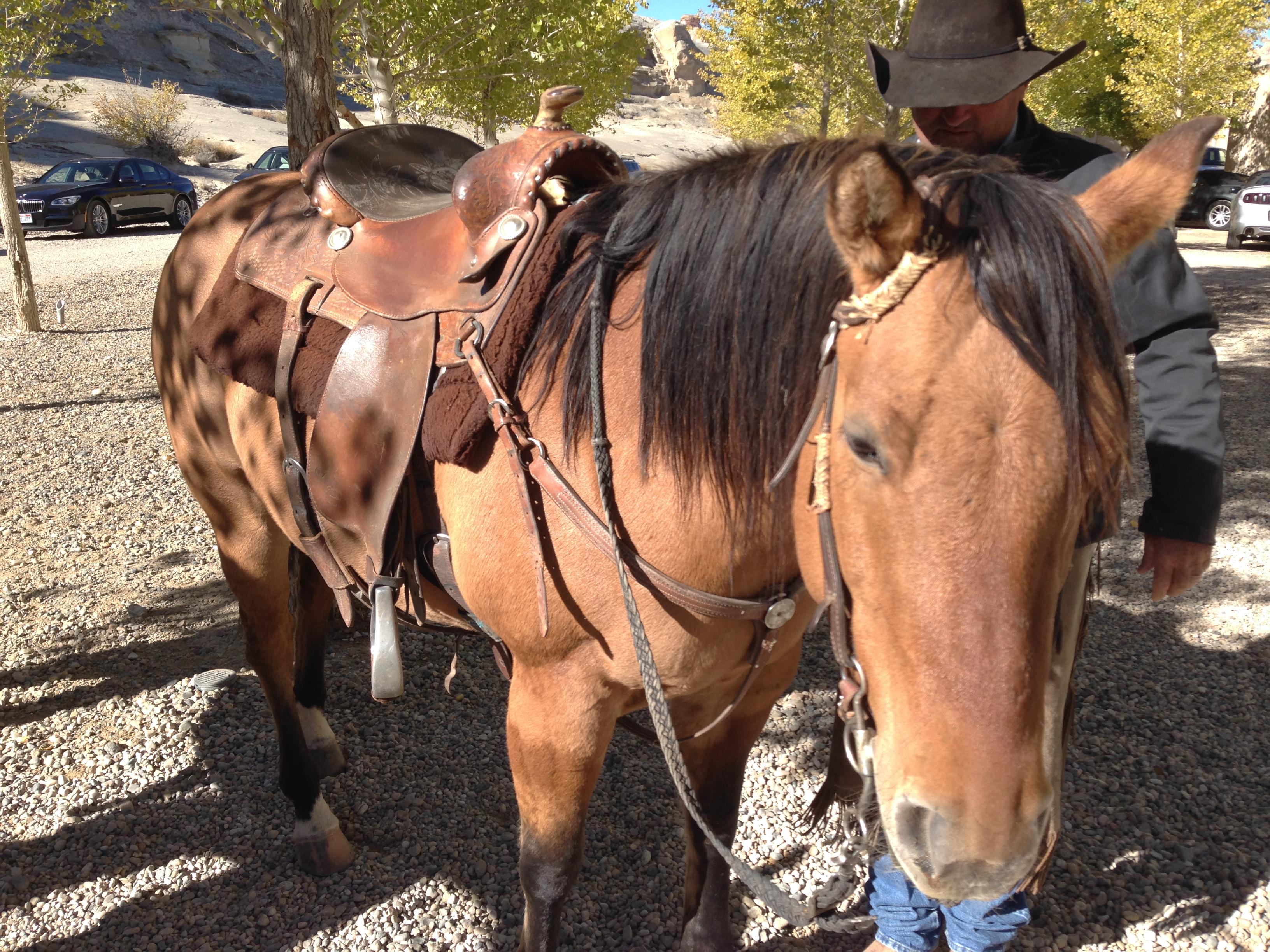 aman_amangiri_horse_cowboy_fancyoli